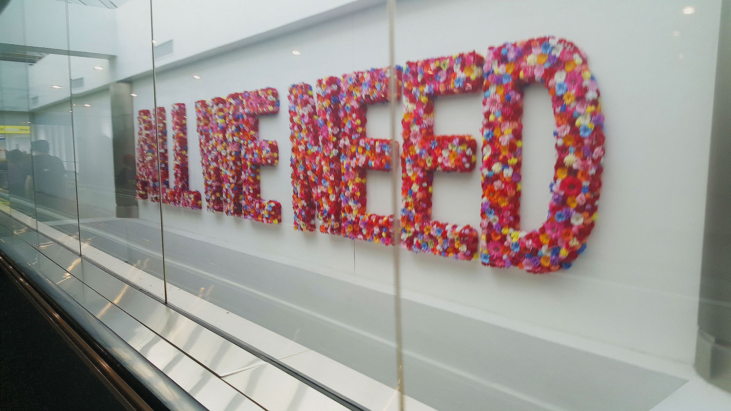 'All We Need' spelled out in flowers