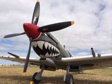 The Temora 'Grey Nurse' Spitfire Mk.VIII, looking suitably ferocious