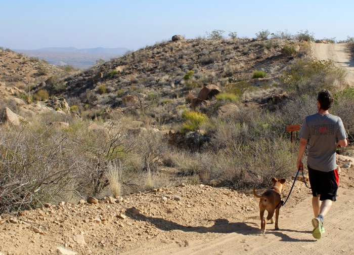 hiking with dog in big bend grapevine hills road