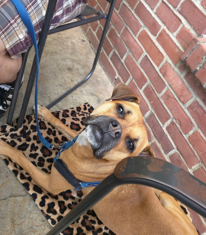 dog at high point coffee