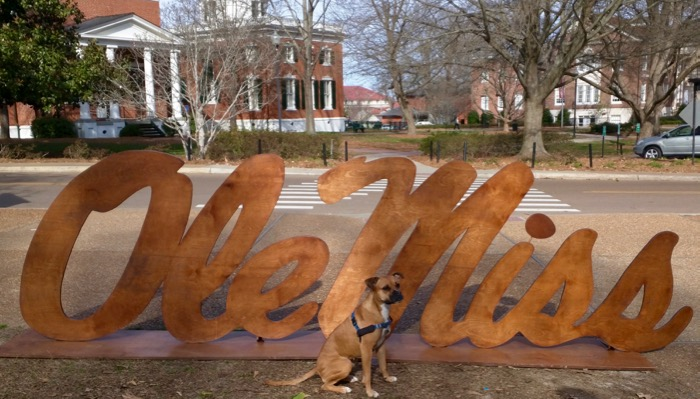 ole miss dog