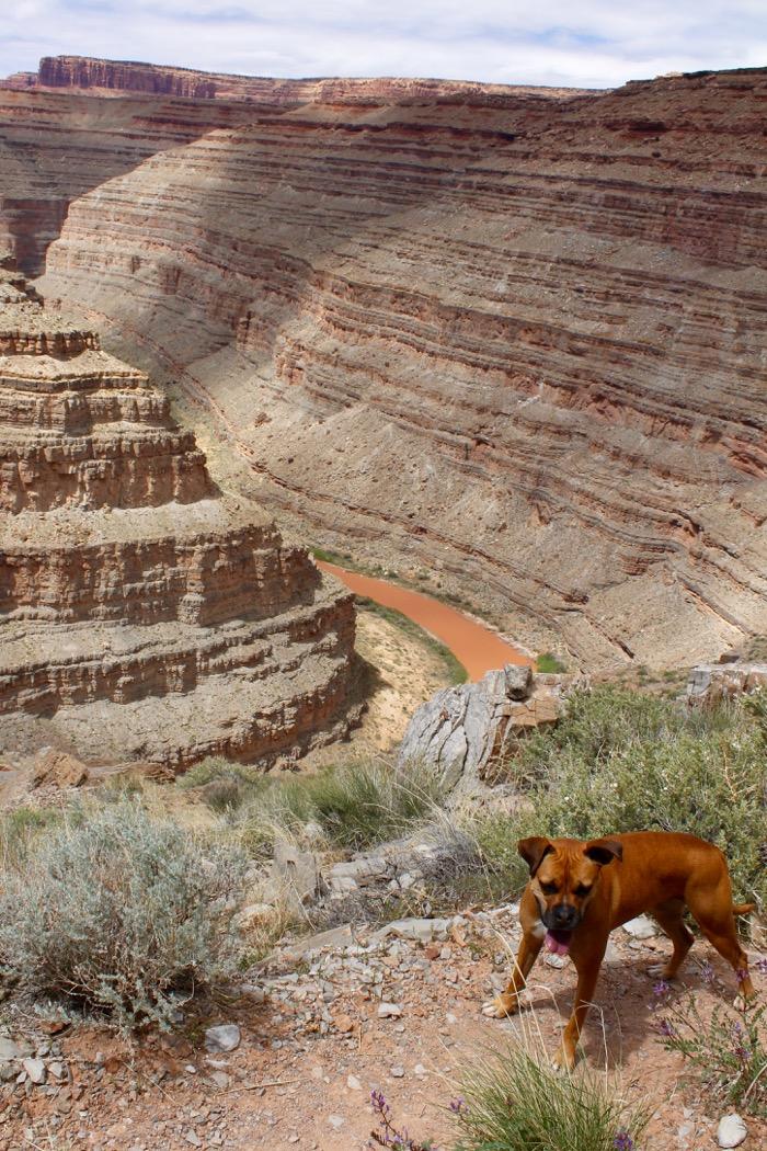 dog on honaker trail goosenecks state park