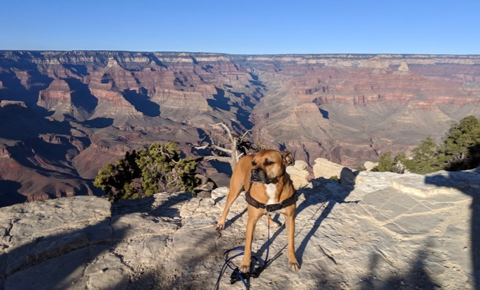 Bugsy on the Rim Trail, Grand Canyon