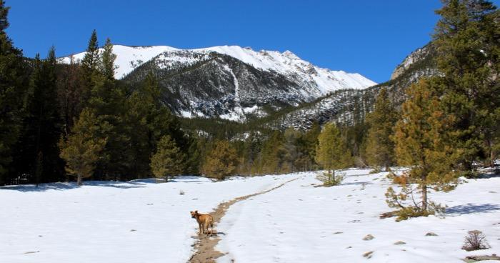 buena vista brown creek