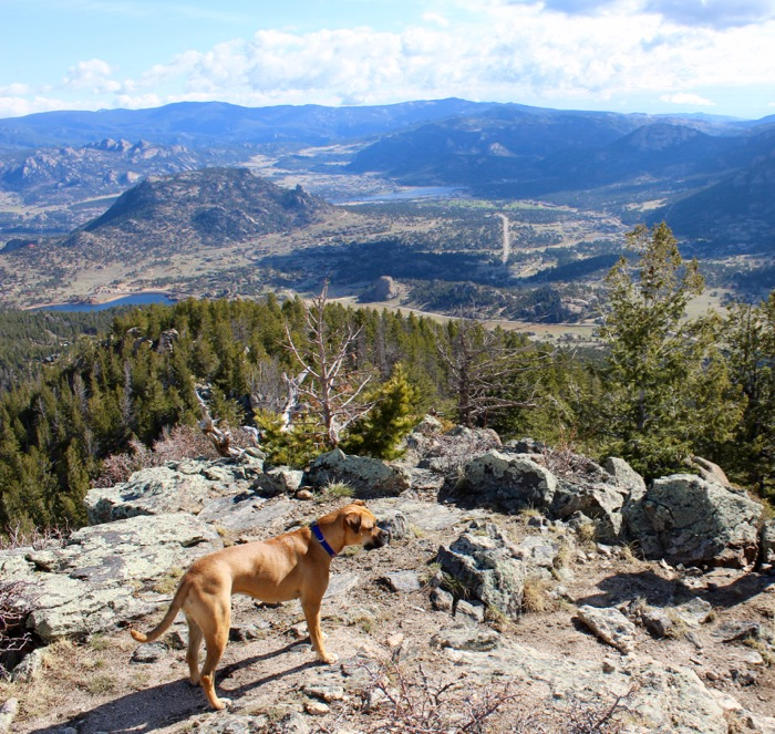lily mountain hike estes park