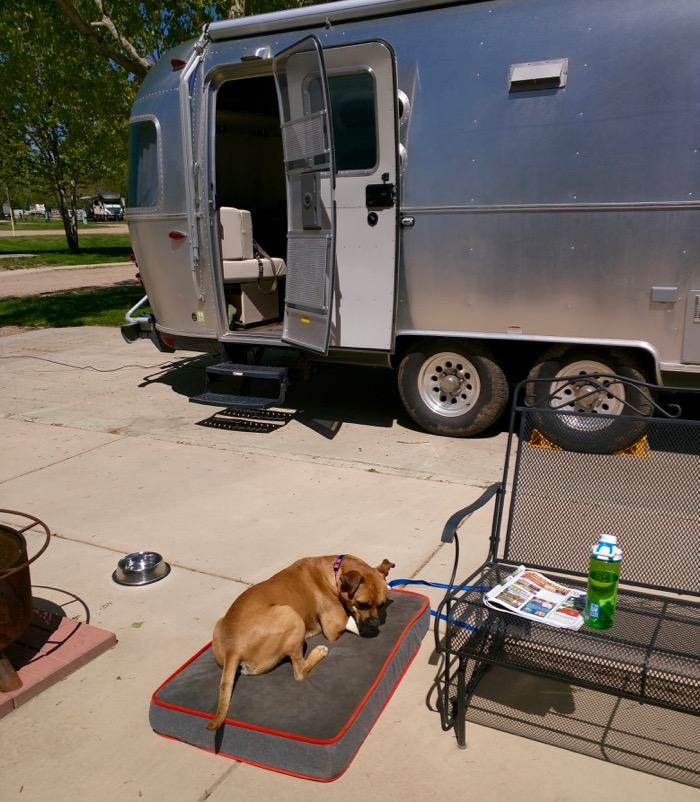 airstream and dog in fort collins