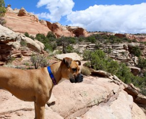 grand junction rattlesnake arches hike dog