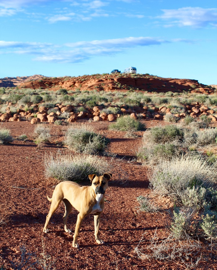airstream dog in valley of the gods utah