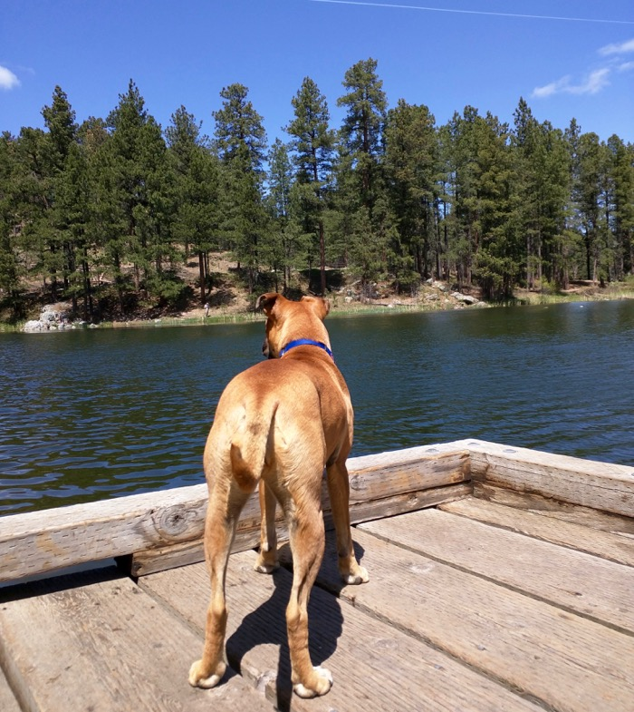 dog at horse thief lake