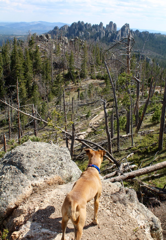 harney peak hiking dog