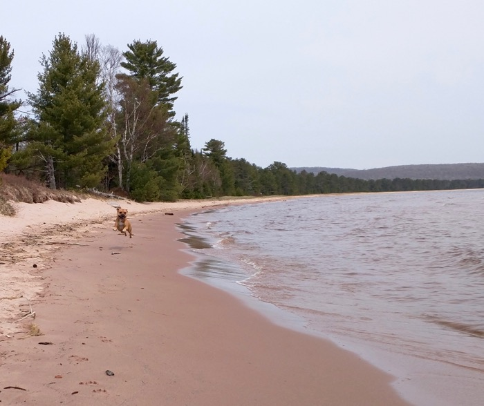 dog on shore of lake superior