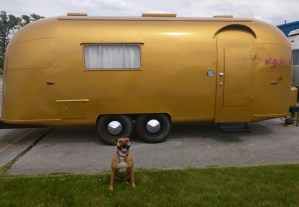 dog by gold antique airstream