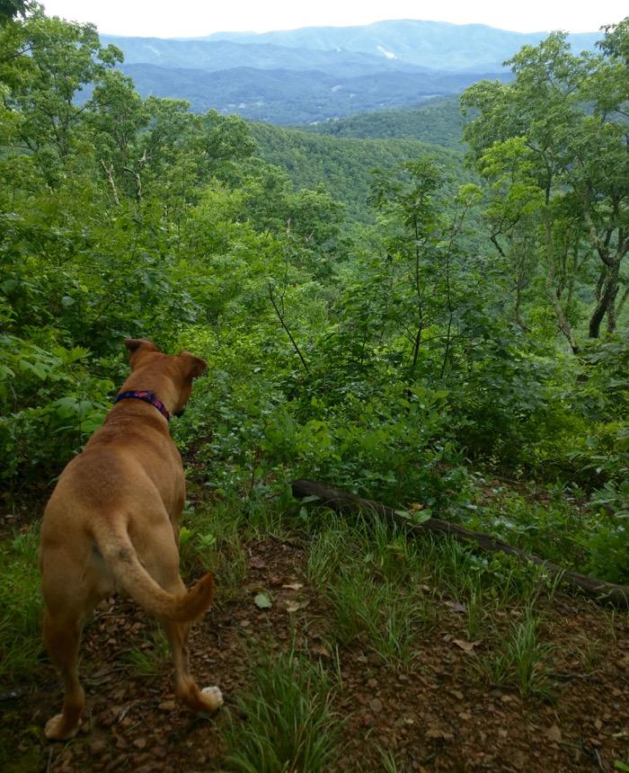 lone oak to tip top hike