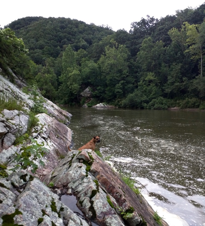 dog at nolichucky river