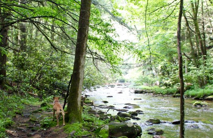 laurel falls hike dog by river