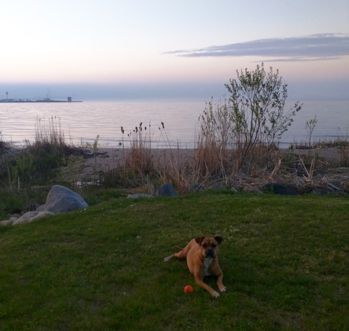dog at straits of mackinac