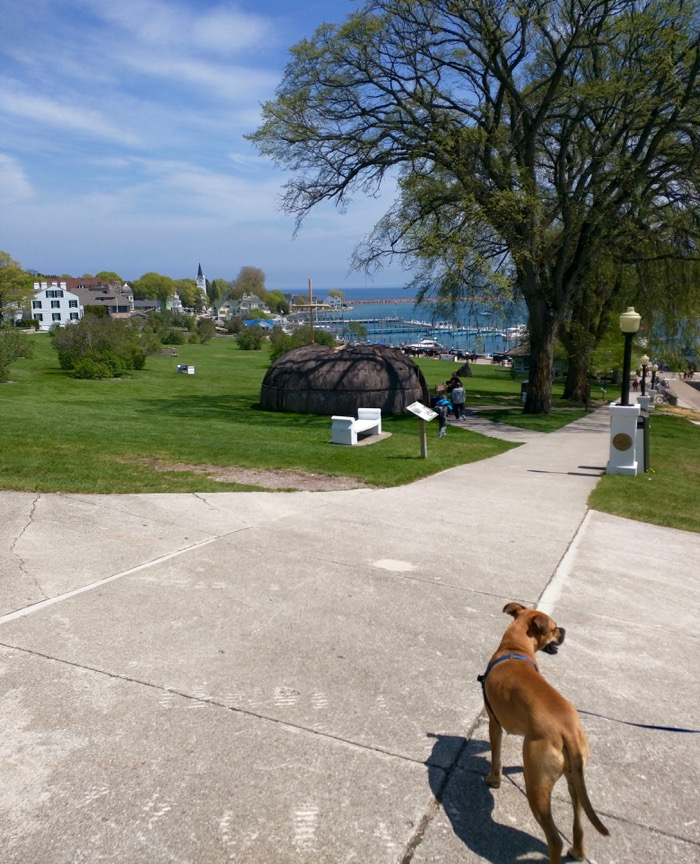 dog on mackinac island