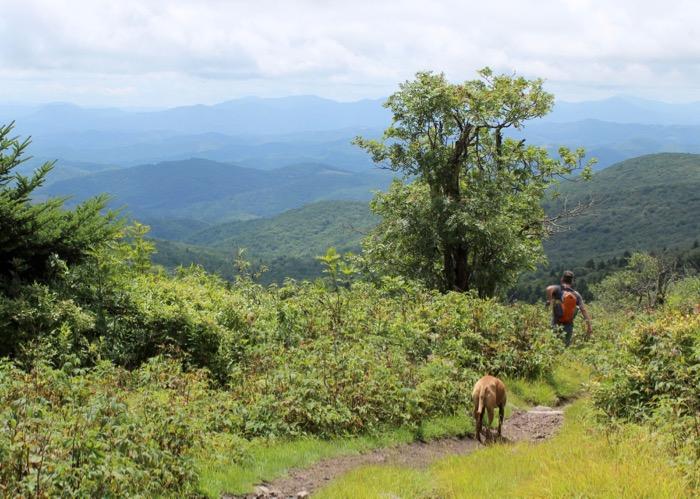 damascus mount rogers hiking dog