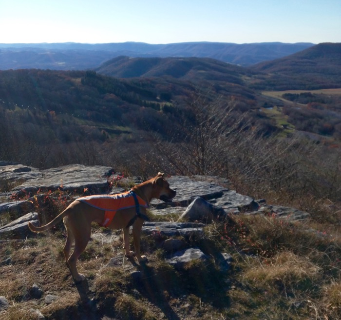 dog on bald knob canaan valley