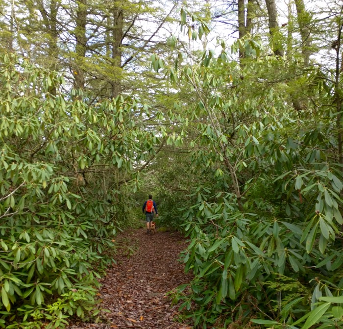 rhododendron hike canaan mountain backcountry
