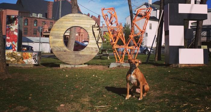 dog love in harrisonburg va