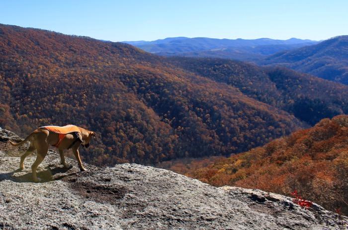 dog on table rock canaan mountain backcountry