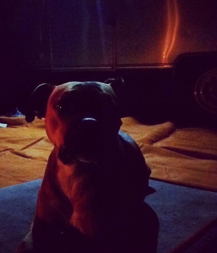 dog by firelight in destin