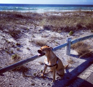 dog near beach in destin