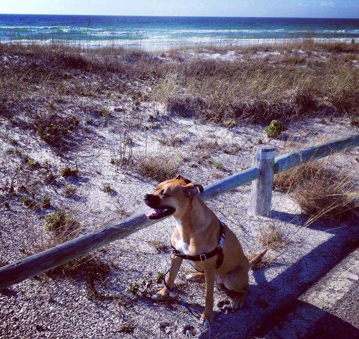 dog near beach in destin