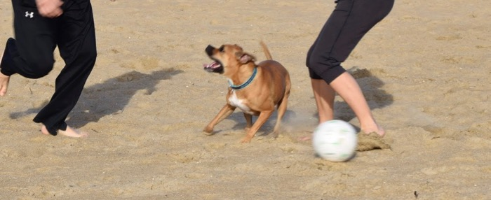 bugsy playing beach soccer