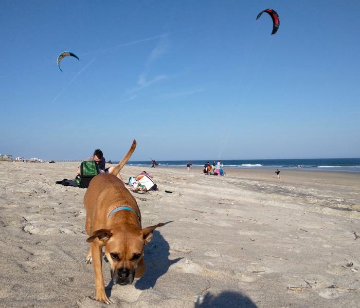 dog at wrightsville beach