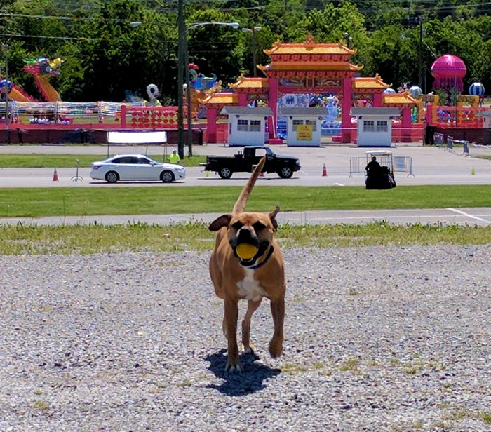Tennessee Fairgrounds camping
