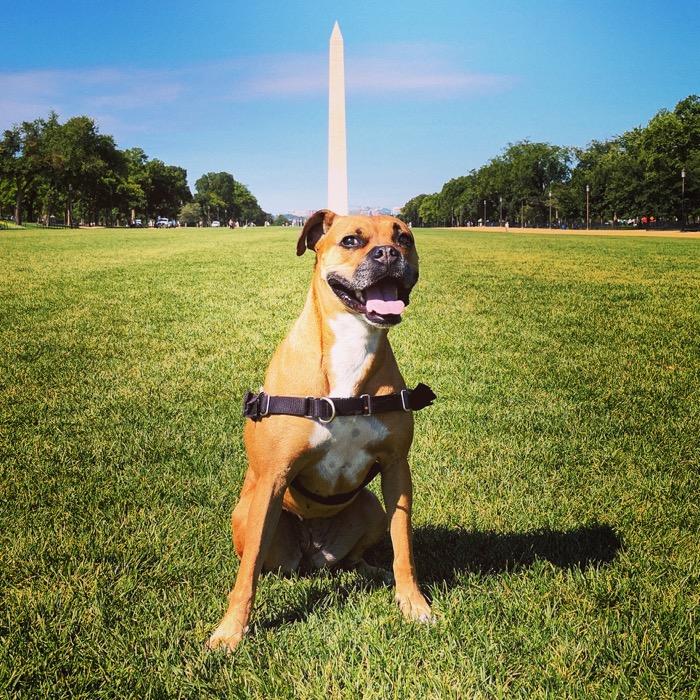 Bugsy at the Washington Monument