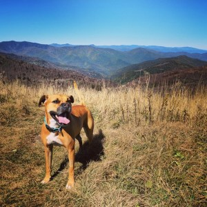 Bugsy on Black Balsam Knob
