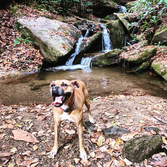 Bugsy by waterfall in Florence Nature Preserve
