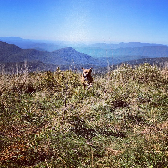 happy dog on max patch