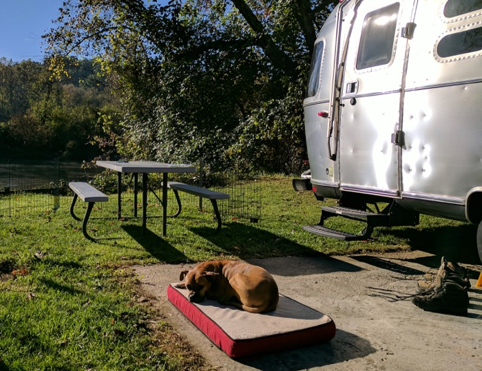 bugsy relaxing in the airstream yard
