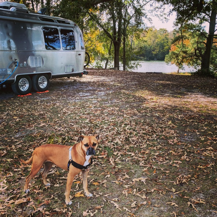 airstream in savannah campground