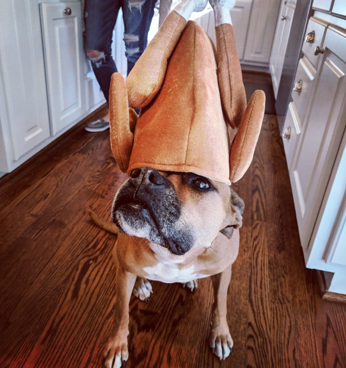 bugsy at thanksgiving