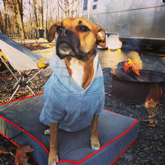dog in sweatshirt at campground