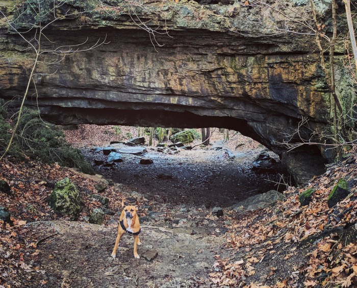 bugsy under the natural bridge at ha ha tonka state park