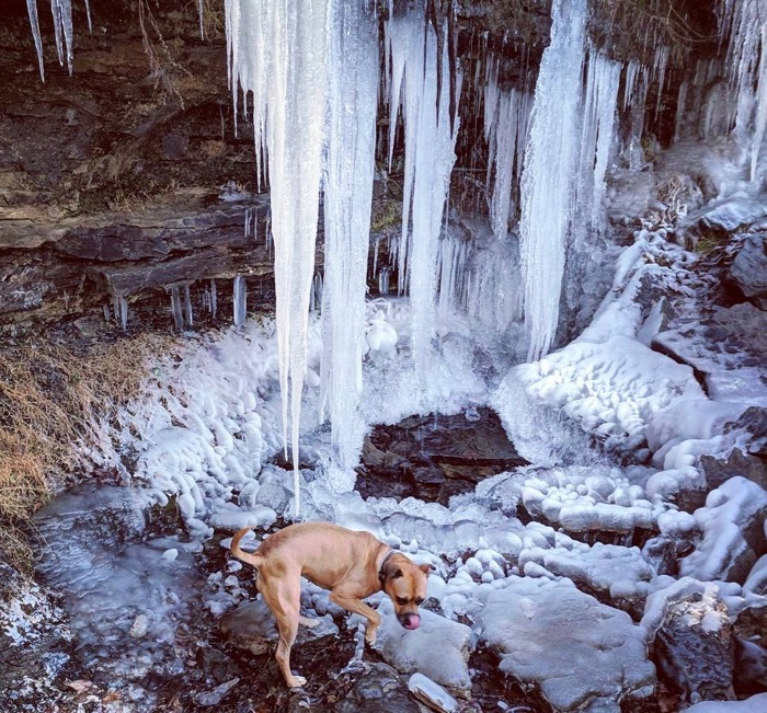 bugsy and a frozen waterfall in devil's den state park