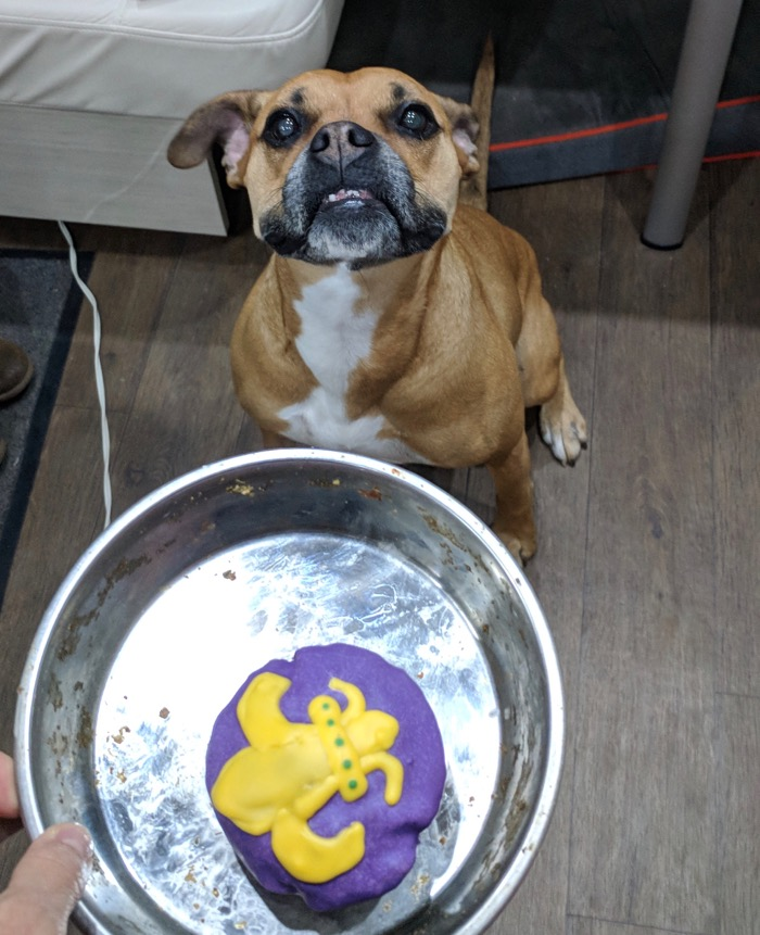 Mardi Gras dog treat