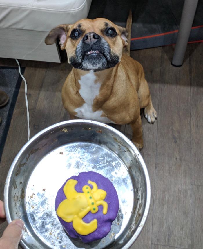 Mardi Gras dog treat