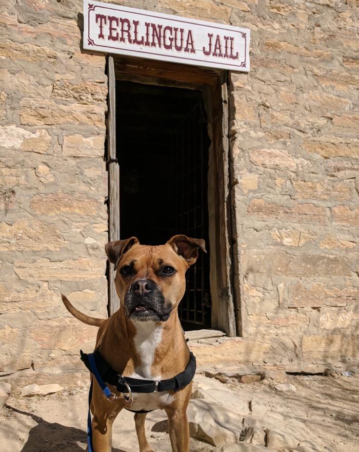 Bugsy at Terlingua Jail