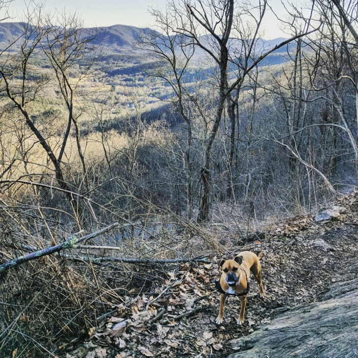 trail run with dog at craven gap asheville