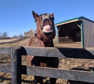 horse smiling at old friends lexington ky