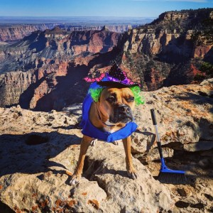 Halloween dog at the Grand Canyon