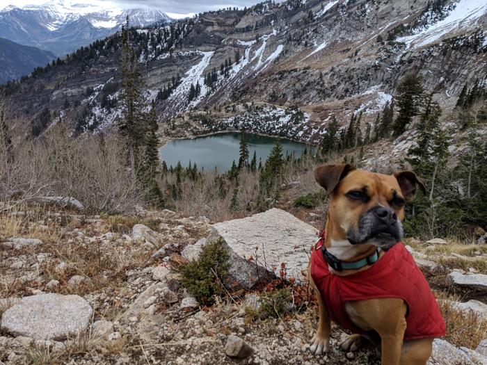 Bugsy by Silver Lake Utah