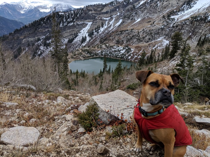 Bugsy by Silver Lake Utah